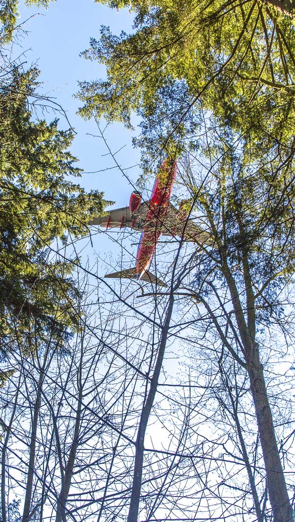 Photo showing airplane taking off above treetops.
