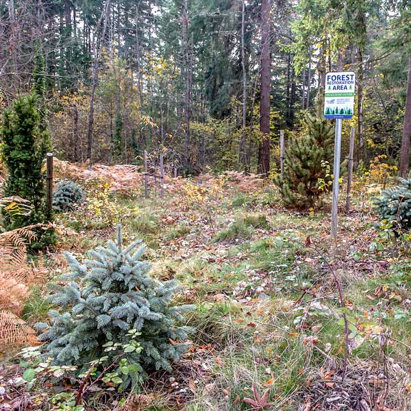 Area near Sea-Tac where there has been tree removal and replanting.